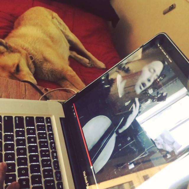 Cinco is super into the video I made yesterday #musicvideo #feignedenthusiasm #notimpressed #cello #songwriter #naptime